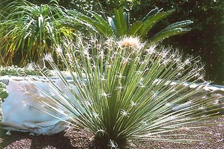 Giardino botanico isola d 39 elba residence cala dei peducelli - Piante esotiche da giardino ...